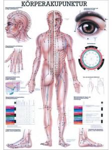 akupunktur tafel
